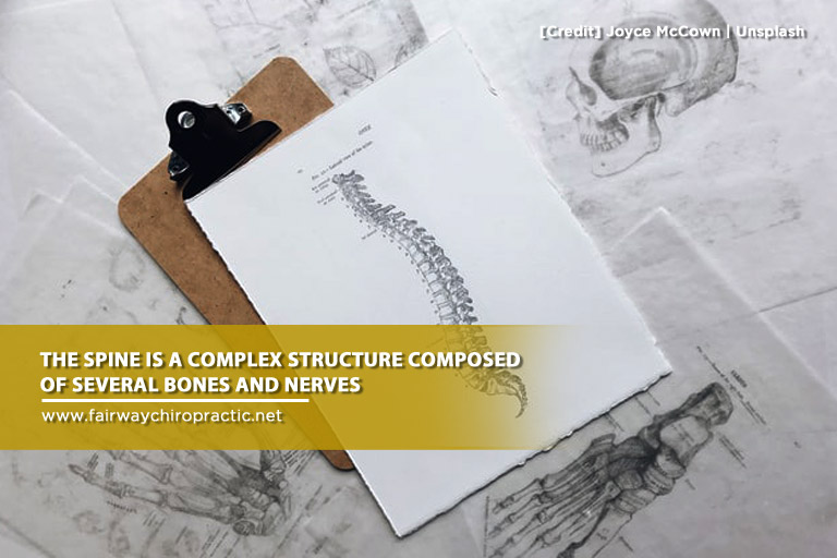 spine is a complex structure